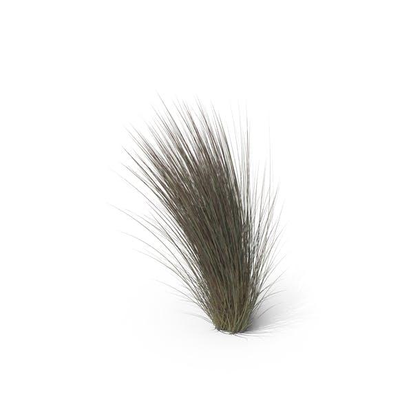 Cover Image for Beard Grass