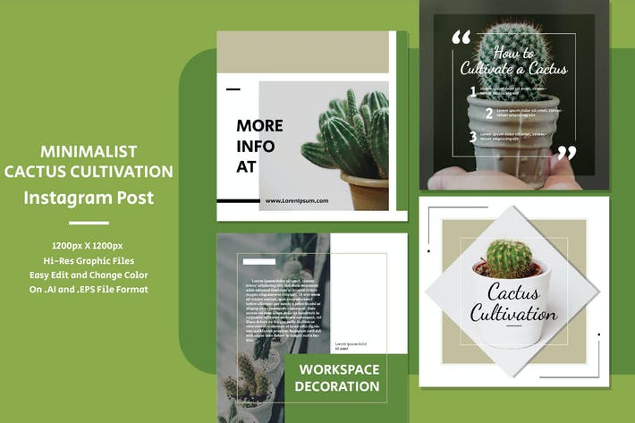 Thumbnail for Minimalist Cactus Cultivation