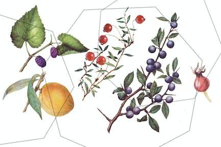 Fruits and berries - vintage, retro botanical set