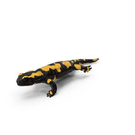 Salamander Laufen
