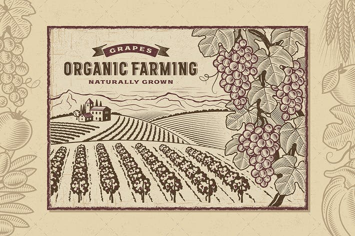 Thumbnail for Grapes Organic Farming Landscape