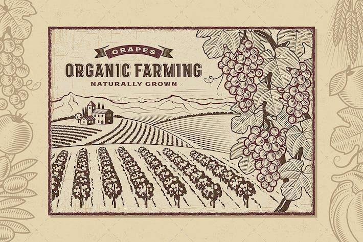 Thumbnail for Uva Horizontal de la Agricultura Ecológica