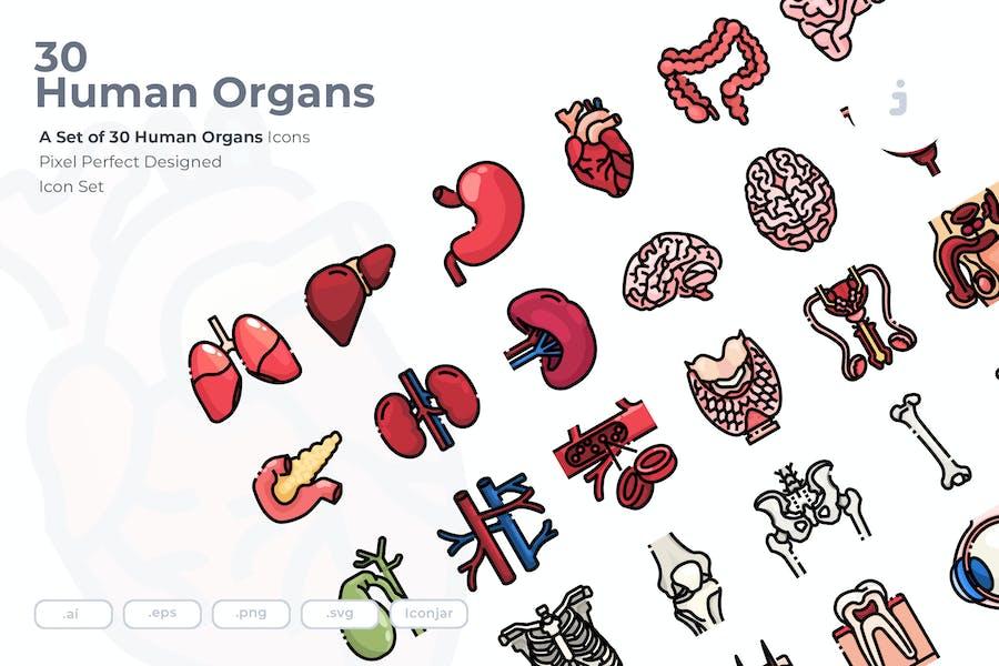 30 Human Organs Icons