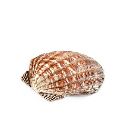Concha de almeja