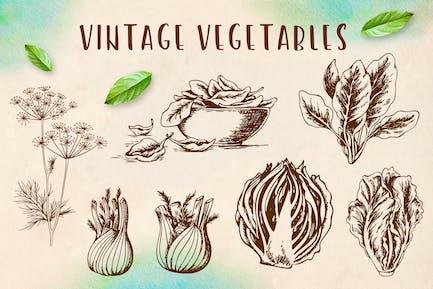 Set of Vintage Vegetables