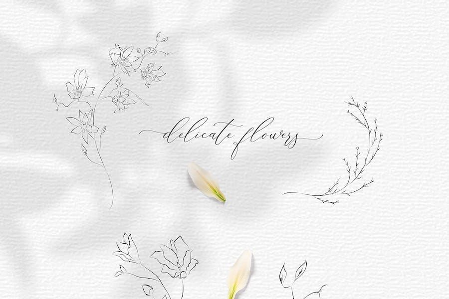 Line drawing botanical illustrations flowers
