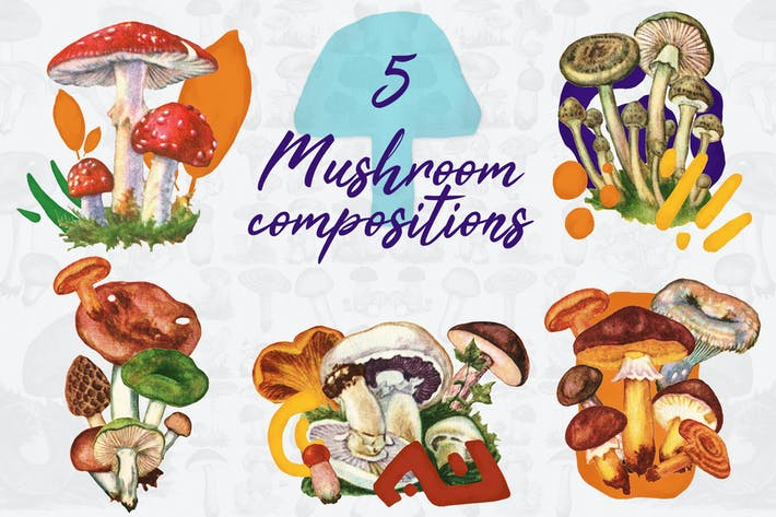Thumbnail for 5 Mushroom Compositions