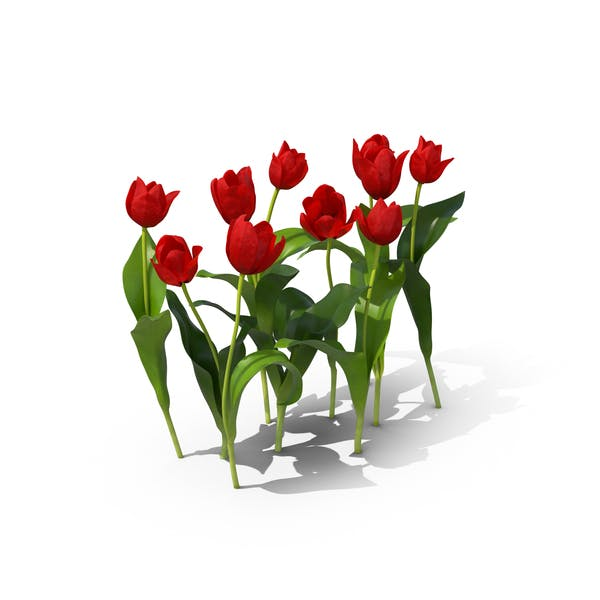 Thumbnail for Tulips