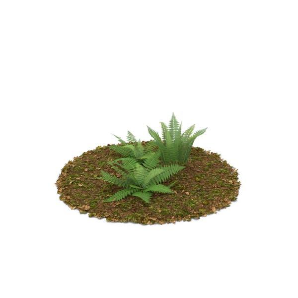 Thumbnail for Ferns
