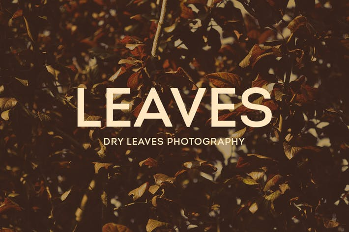 Thumbnail for Dry Leaves Photography
