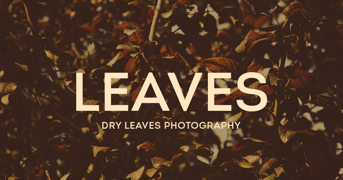 Download Dry Leaves Photography by mamounalbibi