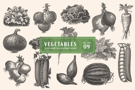 Vintage Vegetable Illustrations Vol. 9