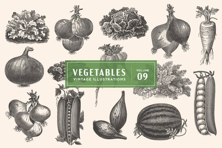 Thumbnail for Vintage Vegetable Illustrations Vol. 9