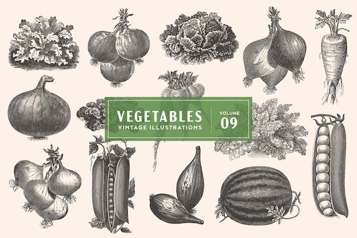 Cover Image For Vintage Vegetable Illustrations Vol. 9
