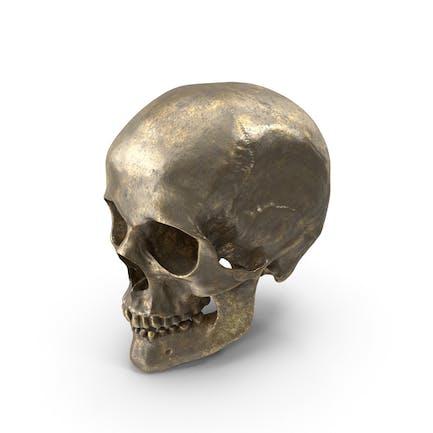 Cráneo Humano Oro Viejo