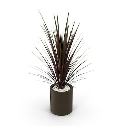 Spiky rote Pflanze im braunen Topf