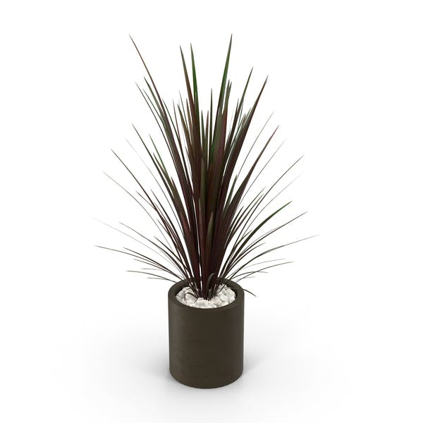 Spiky Red Plant In Brown Pot