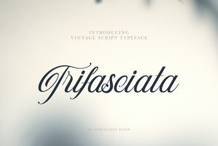 Trifasciata