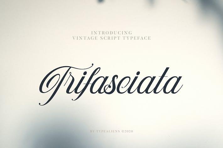 Thumbnail for Trifasciata