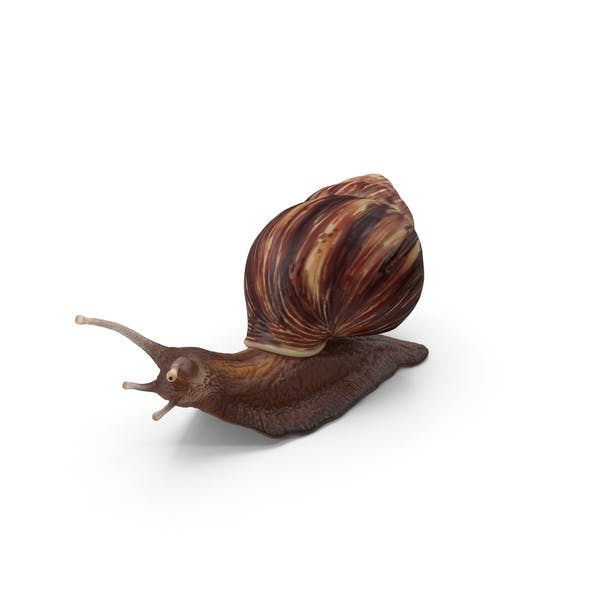 Thumbnail for Snail