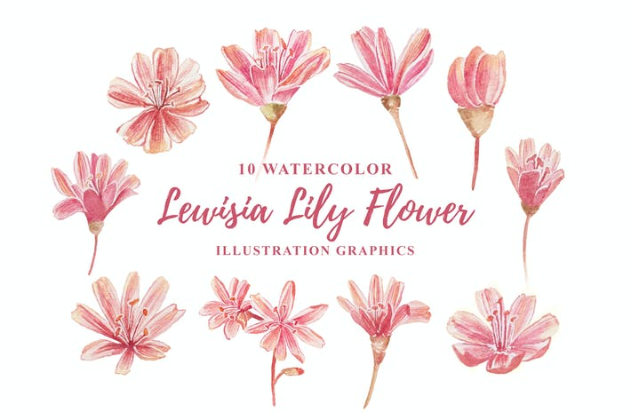 Thumbnail for 10 Watercolor Lewisia Flower Illustration Graphics