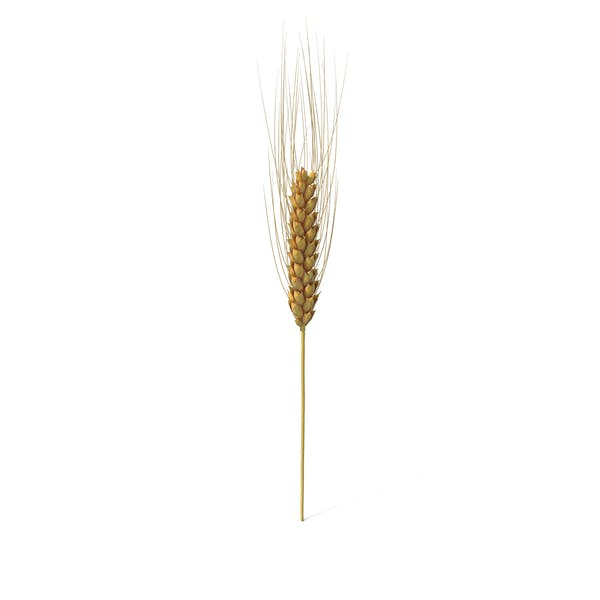 Wheat Branch