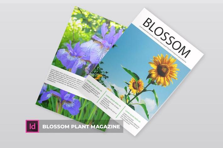 Thumbnail for Blossom Plant | Magazine