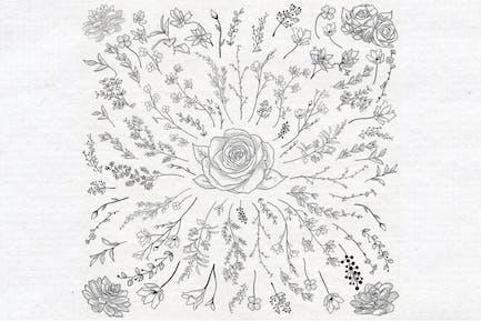 Individuelle Vektor gezeichnete Kräuter, Pflanzen, Blumen.