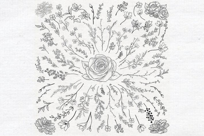Thumbnail for Individual Vector Drawn Herbs, Plants,  Flowers.