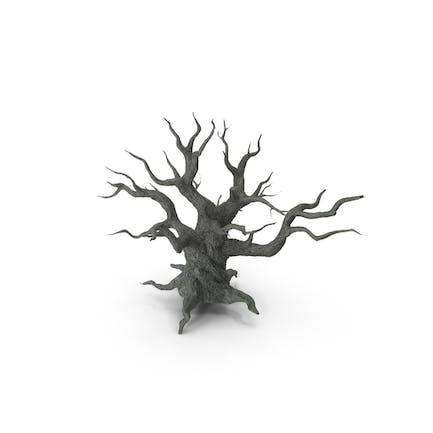 Unheimliche alte verdrehte Baum