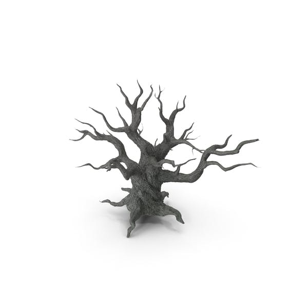 Spooky Old Twisted Tree