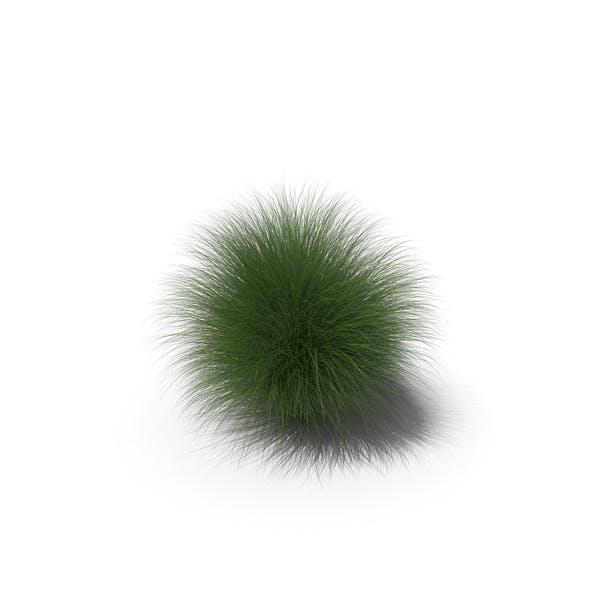 Thumbnail for Miscanthus Sinensis 'Morning Light' Grass