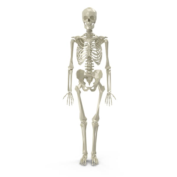 Thumbnail for Low Poly Skeleton