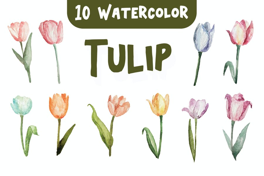 10 Watercolor Tulip Flower Illustration Graphics - product preview 0