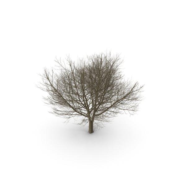 Thumbnail for White Ash Winter