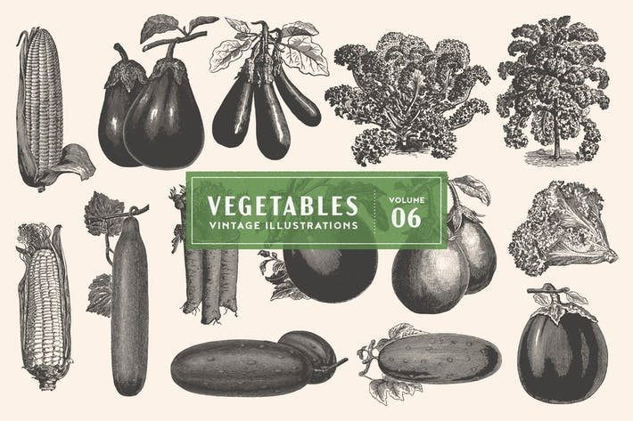 Thumbnail for Vintage Vegetable Illustrations Vol. 6