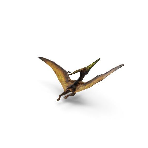 Pteranodon Fliegende fleischfressende Reptilien-Pose mit Fell