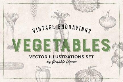 Vegetables - Vintage Illustration Set