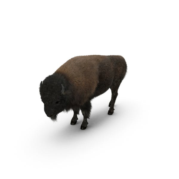 Thumbnail for American Bison