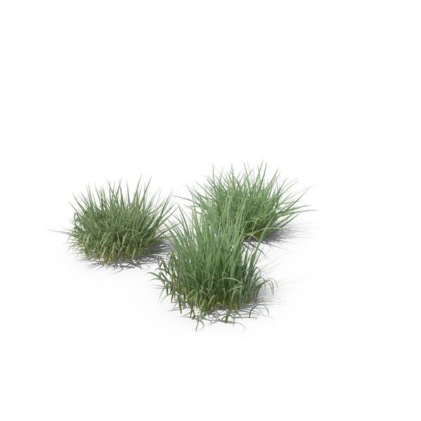 Thumbnail for Purple Moor-Grass