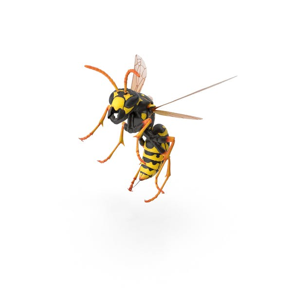 Thumbnail for Paper Wasp