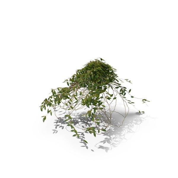Ivy Cluster