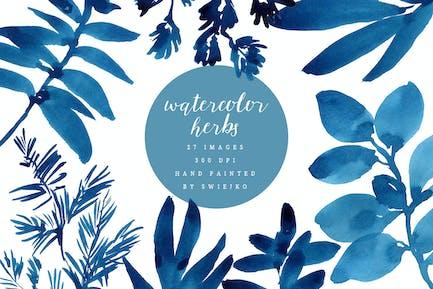 Watercolor herbs, indigo ink