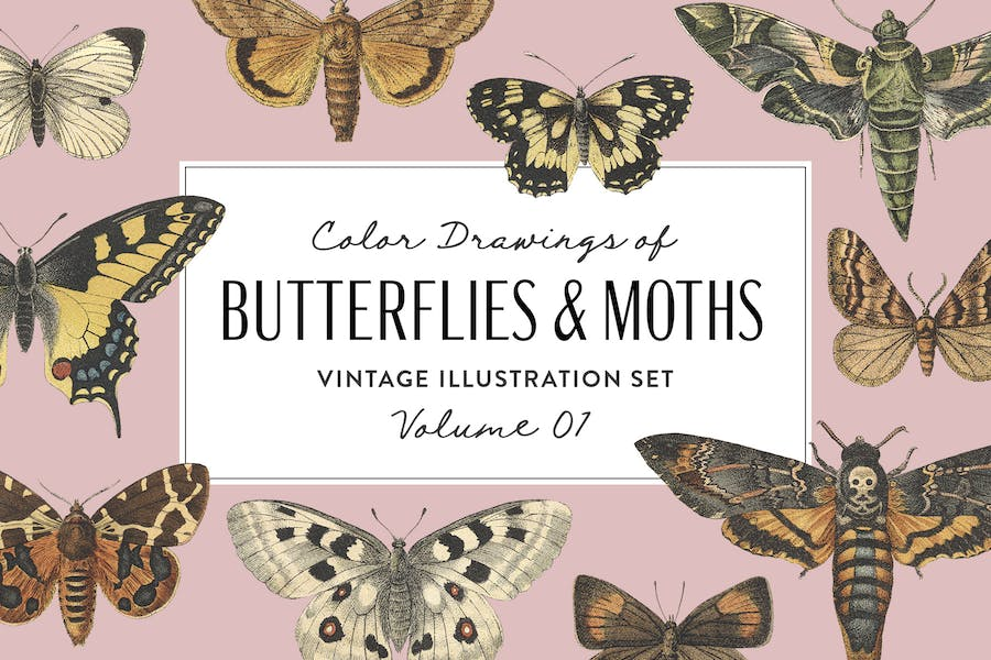Butterflies & Moths Vintage Graphics Vol. 1