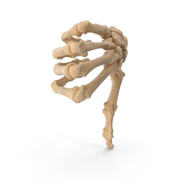 Скелетные большие пальцы вниз знак