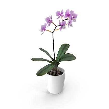 Orchideen-Blume