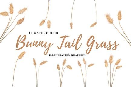 10 ilustración de la acuarela de la cola de conejo hierba