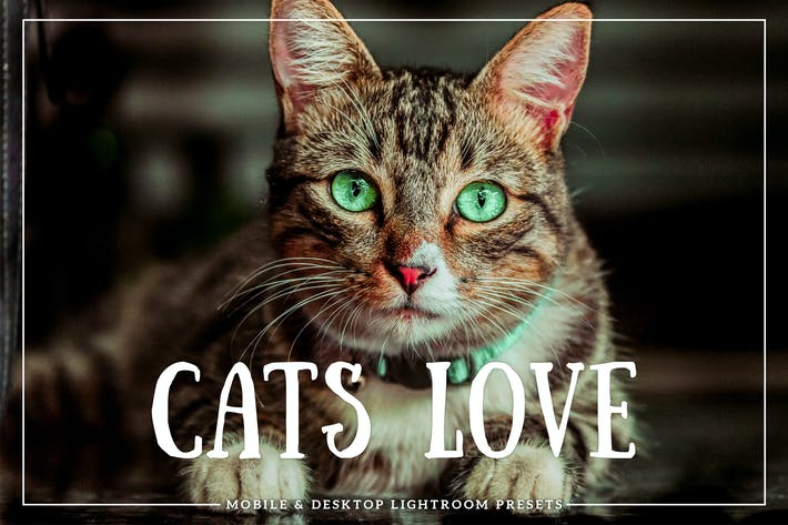 Cover Image For Cats Love Mobile & Desktop Lightroom Presets