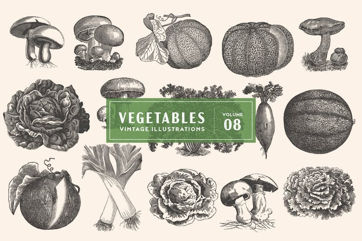 Thumbnail for Vintage Vegetable Illustrations Vol. 8