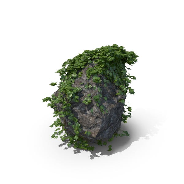 Thumbnail for Ivy Covered Rock
